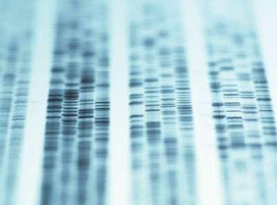 Test ADN prénatal : Pour quoi faire ?